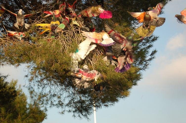 Concurso de plazas para el intercomarcal de el altet for Repsol butano santa pola